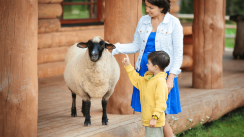 Picture of parent and child enjoying a petting zoo in Michigan.