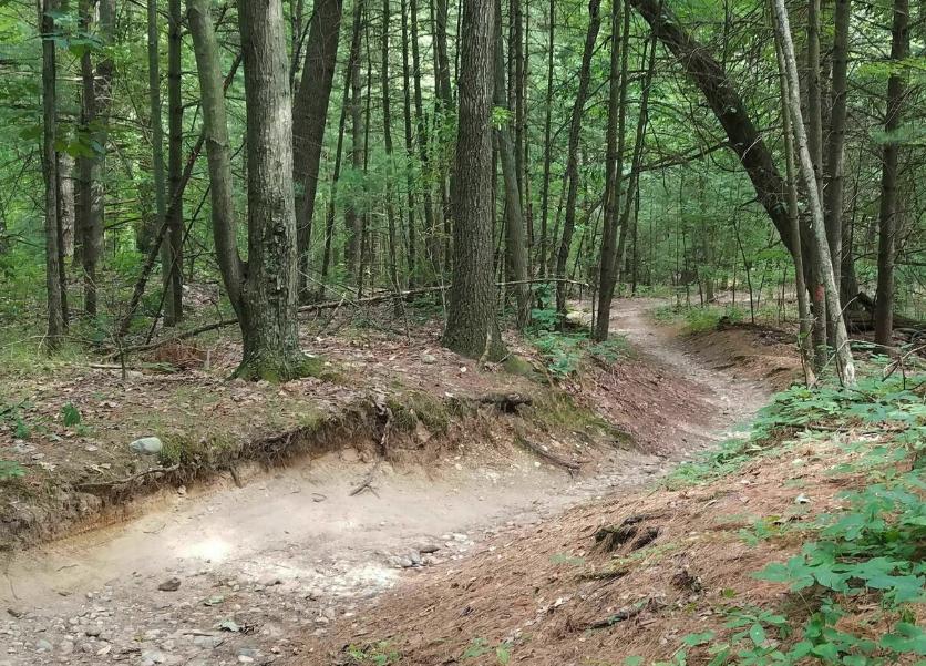 Yankee Springs Trails