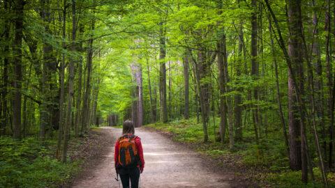 An image of someone hiking and enjoying Michigan summer activities.